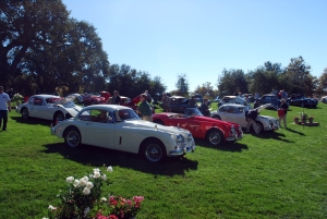 Motorcars on the green